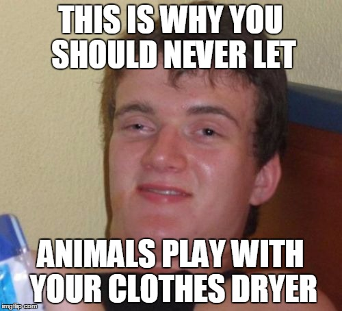 10 Guy Meme | THIS IS WHY YOU SHOULD NEVER LET ANIMALS PLAY WITH YOUR CLOTHES DRYER | image tagged in memes,10 guy | made w/ Imgflip meme maker