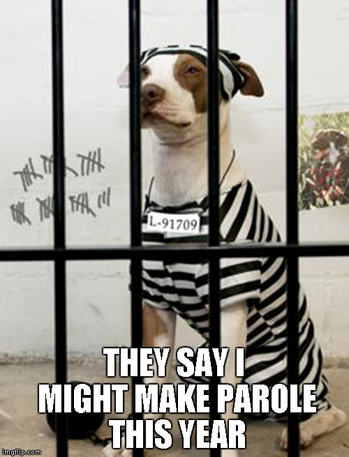 THEY SAY I MIGHT MAKE PAROLE THIS YEAR | made w/ Imgflip meme maker