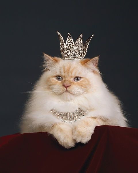 Image result for queen cat