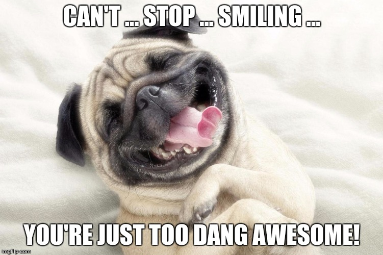 youre awesome dog