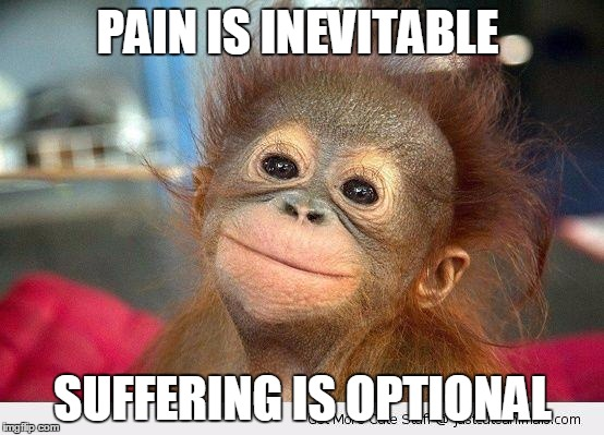 Cute Monkey | PAIN IS INEVITABLE SUFFERING IS OPTIONAL | image tagged in cute monkey | made w/ Imgflip meme maker