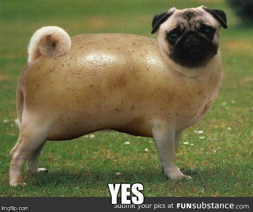 pug-tato | YES | image tagged in pug-tato | made w/ Imgflip meme maker
