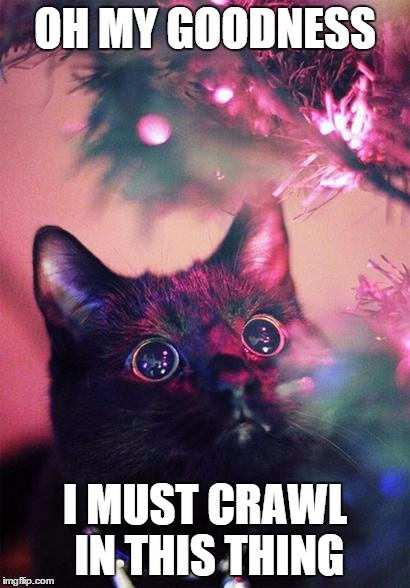 every cat on christmas | OH MY GOODNESS I MUST CRAWL IN THIS THING | image tagged in christmas cat | made w/ Imgflip meme maker