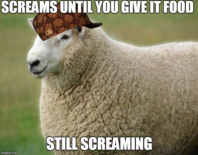 Scumbag Sheep | SCREAMS UNTIL YOU GIVE IT FOOD STILL SCREAMING | image tagged in memes,animals,sheep | made w/ Imgflip meme maker