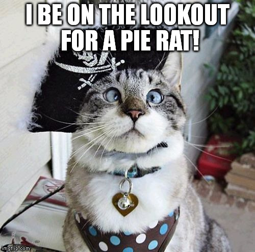 Spangles | I BE ON THE LOOKOUT FOR A PIE RAT! | image tagged in memes,spangles | made w/ Imgflip meme maker