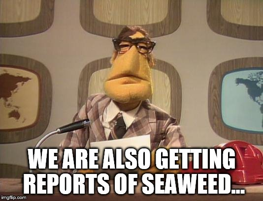 WE ARE ALSO GETTING REPORTS OF SEAWEED... | made w/ Imgflip meme maker
