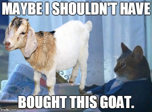 I thought the ad said boat. | MAYBE I SHOULDN'T HAVE BOUGHT THIS GOAT. | image tagged in memes,funny,animals,goat,cats,i should buy a boat cat | made w/ Imgflip meme maker
