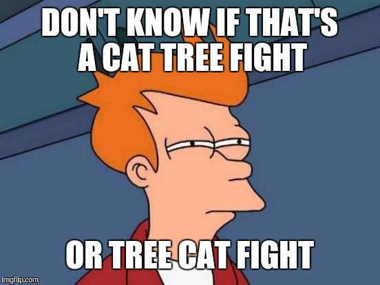 Futurama Fry Meme | DON'T KNOW IF THAT'S A CAT TREE FIGHT OR TREE CAT FIGHT | image tagged in memes,futurama fry | made w/ Imgflip meme maker