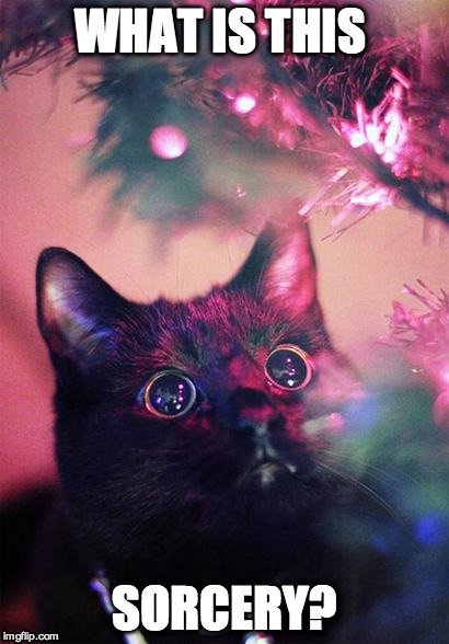 Meowy Christmas | WHAT IS THIS SORCERY? | image tagged in christmas cat,happy holidays,merry christmas | made w/ Imgflip meme maker