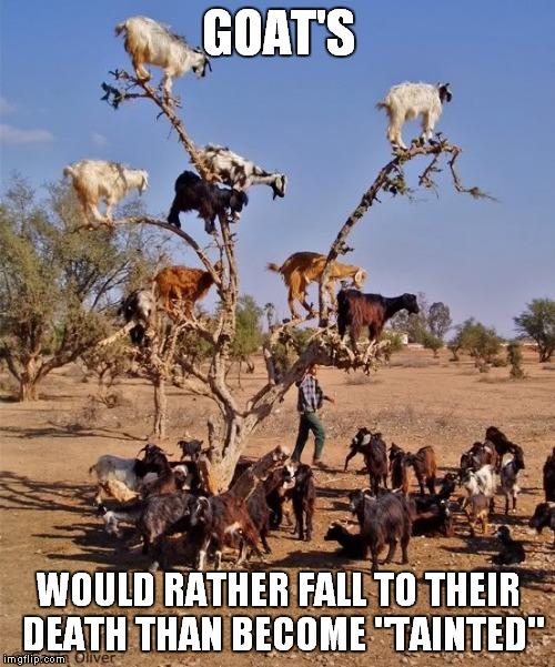 "GOAT'S WOULD RATHER FALL TO THEIR DEATH THAN BECOME ""TAINTED"" 