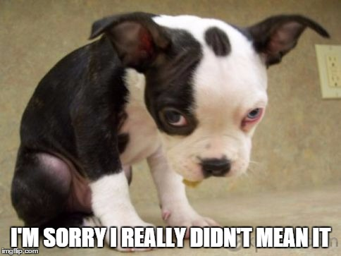 Image tagged in puppy sad imgflip im sorry i really didnt mean it image tagged in puppy voltagebd Images