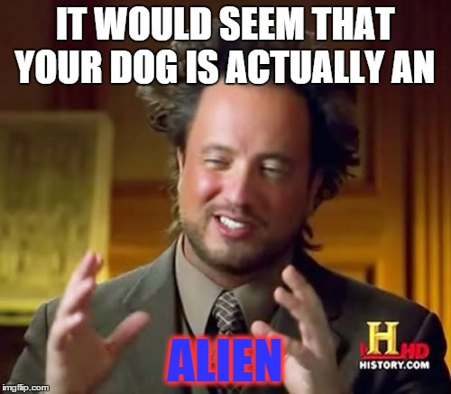 Ancient Aliens Meme | IT WOULD SEEM THAT YOUR DOG IS ACTUALLY AN ALIEN | image tagged in memes,ancient aliens | made w/ Imgflip meme maker
