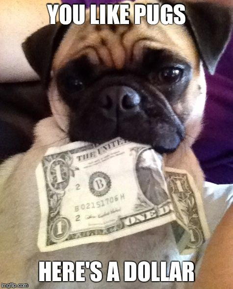 Pug with money | YOU LIKE PUGS HERE'S A DOLLAR | image tagged in pug with money | made w/ Imgflip meme maker