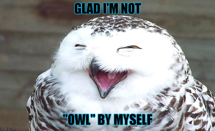 "GLAD I'M NOT ""OWL"" BY MYSELF 