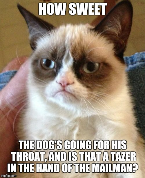 Grumpy Cat Meme | HOW SWEET THE DOG'S GOING FOR HIS THROAT, AND IS THAT A TAZER IN THE HAND OF THE MAILMAN? | image tagged in memes,grumpy cat | made w/ Imgflip meme maker