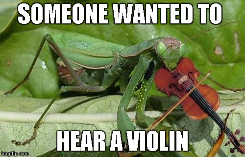 SOMEONE WANTED TO HEAR A VIOLIN | made w/ Imgflip meme maker