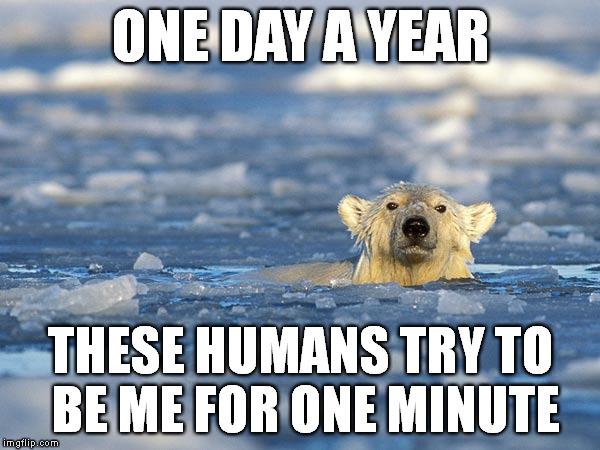 Polar Bear Swim Imgflip