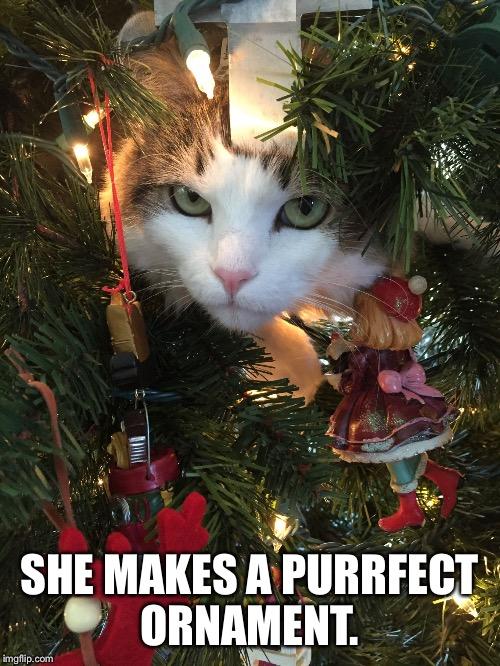 Cat Xmas Tree Meme