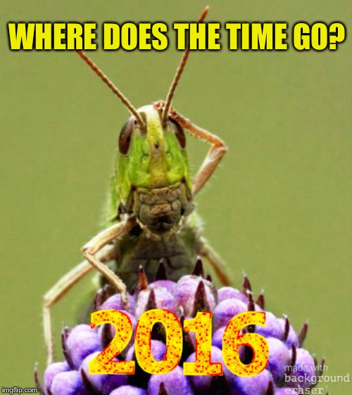 Happy new year, Grasshopper! | WHERE DOES THE TIME GO? | image tagged in grasshopper,happy new year,2017,justjeff | made w/ Imgflip meme maker