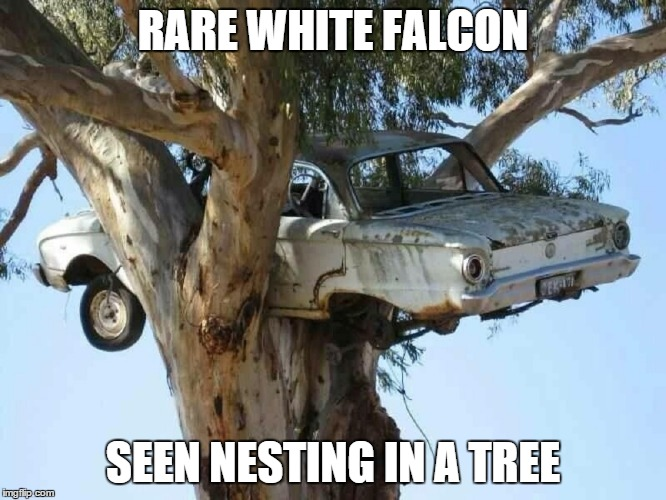 RARE WHITE FALCON SEEN NESTING IN A TREE | made w/ Imgflip meme maker