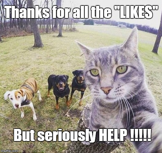 "Like ALL selfies a CRY FOR HELP! | Thanks for all the ""LIKES"" But seriously HELP !!!!! 