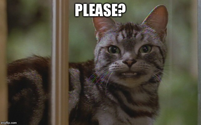 Please? | PLEASE? | image tagged in please,memes,funny,tabby cat,stuart little,1990's | made w/ Imgflip meme maker