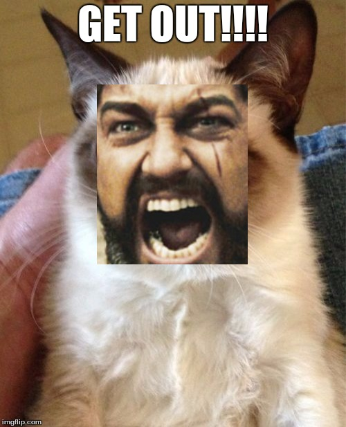 Grumpy Cat Meme | GET OUT!!!! | image tagged in memes,grumpy cat | made w/ Imgflip meme maker