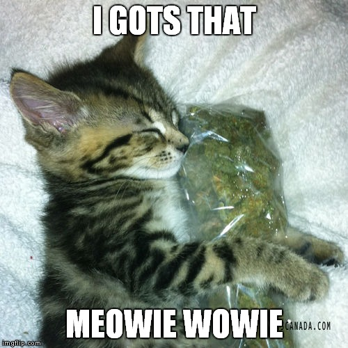 I GOTS THAT MEOWIE WOWIE | made w/ Imgflip meme maker