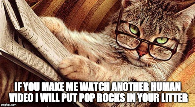 IF YOU MAKE ME WATCH ANOTHER HUMAN VIDEO I WILL PUT POP ROCKS IN YOUR LITTER | made w/ Imgflip meme maker