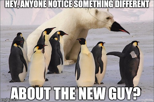 Undercover Boss, South Pole | HEY, ANYONE NOTICE SOMETHING DIFFERENT ABOUT THE NEW GUY? | image tagged in memes | made w/ Imgflip meme maker