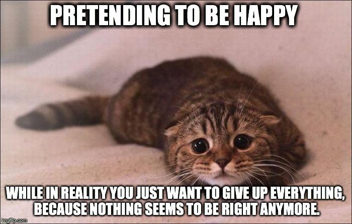 wqxvx sad cat imgflip