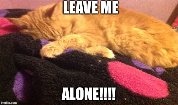 Cats in the morning | LEAVE ME ALONE!!!! | image tagged in first world cat problems | made w/ Imgflip meme maker