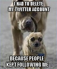 Truthfully, I've never had a Twitter account. Is it really that big of a deal? | I HAD TO DELETE MY TWITTER ACCOUNT BECAUSE PEOPLE KEPT FOLLOWING ME | image tagged in paranoid dog,funny dogs,memes,funny,dogs,funny animals | made w/ Imgflip meme maker