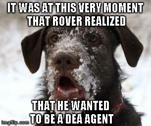 Don't you just love it when you find your calling? | IT WAS AT THIS VERY MOMENT THAT ROVER REALIZED THAT HE WANTED TO BE A DEA AGENT | image tagged in snow face dog,funny dogs,funny,memes,funny animals,dog | made w/ Imgflip meme maker