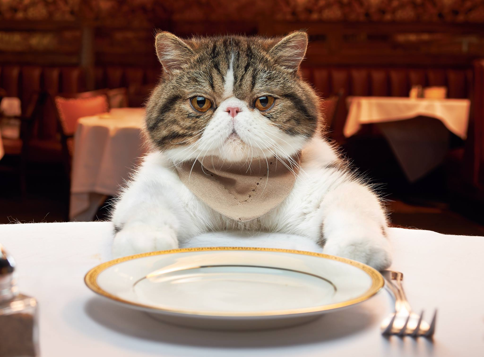 Cat Manners Meme