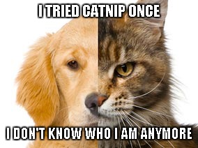 I TRIED CATNIP ONCE I DON'T KNOW WHO I AM ANYMORE | made w/ Imgflip meme maker