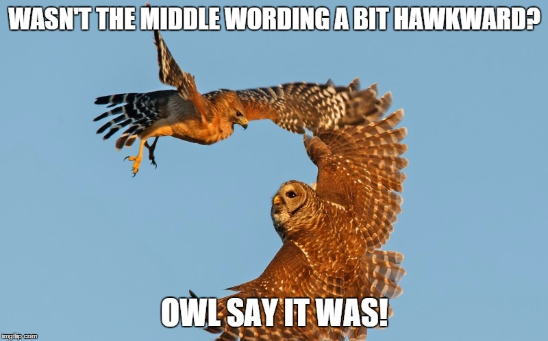 WASN'T THE MIDDLE WORDING A BIT HAWKWARD? OWL SAY IT WAS! | made w/ Imgflip meme maker