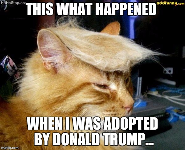 donald trump cat | THIS WHAT HAPPENED WHEN I WAS ADOPTED BY DONALD TRUMP... | image tagged in donald trump cat | made w/ Imgflip meme maker