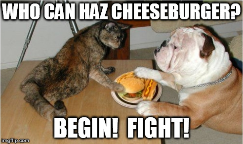death match | WHO CAN HAZ CHEESEBURGER? BEGIN!  FIGHT! | image tagged in dog,cat,cheeseburger | made w/ Imgflip meme maker