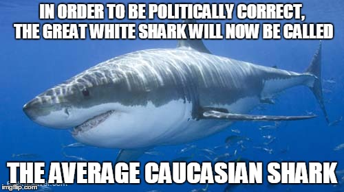 great white average shark | IN ORDER TO BE POLITICALLY CORRECT, THE GREAT WHITE SHARK WILL NOW BE CALLED THE AVERAGE CAUCASIAN SHARK | image tagged in great,white,shark,average,caucasian,politically correct | made w/ Imgflip meme maker