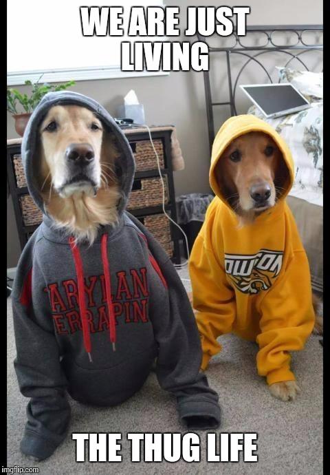 thug Dogs - Imgflip