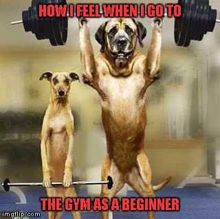 The last time I went to the gym this guy was curling a barbell that weighed more than I was benchpressing.  :( | HOW I FEEL WHEN I GO TO THE GYM AS A BEGINNER | image tagged in dog lifting weights,dog,funny,memes,funny animals,gym | made w/ Imgflip meme maker