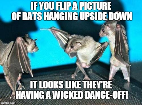 Image Flip | IF YOU FLIP A PICTURE OF BATS HANGING UPSIDE DOWN IT LOOKS LIKE THEY'RE HAVING A WICKED DANCE-OFF! | image tagged in memes,animals | made w/ Imgflip meme maker