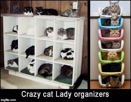 Organize your cats today! | CRAZY CAT LADY ORGANIZERS | image tagged in memes,cats,crazy cat,organizers | made w/ Imgflip meme maker