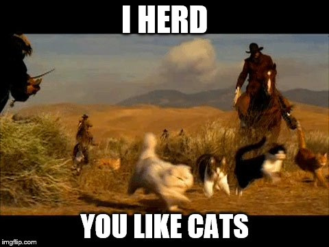 I HERD YOU LIKE CATS | image tagged in memes,cats,cowboy | made w/ Imgflip meme maker