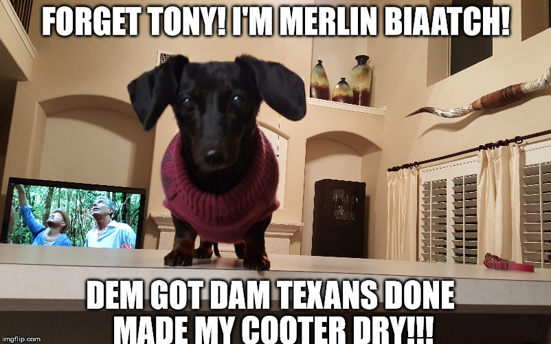 FORGET TONY! I'M MERLIN BIAATCH! DEM GOT DAM TEXANS DONE MADE MY COOTER DRY!!! | image tagged in texans,dachshunds,doxie,playoffs,football,joe rogan experience | made w/ Imgflip meme maker