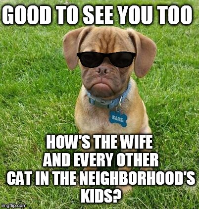 GOOD TO SEE YOU TOO HOW'S THE WIFE AND EVERY OTHER CAT IN THE NEIGHBORHOOD'S KIDS? | made w/ Imgflip meme maker