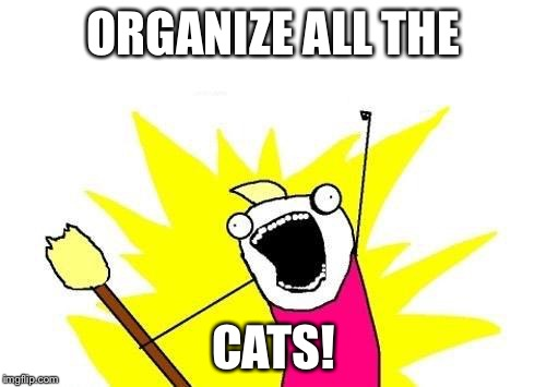 X All The Y Meme | ORGANIZE ALL THE CATS! | image tagged in memes,x all the y | made w/ Imgflip meme maker