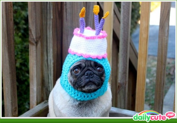 happy birthday pug meme Happy birthday pug Blank Template   Imgflip happy birthday pug meme