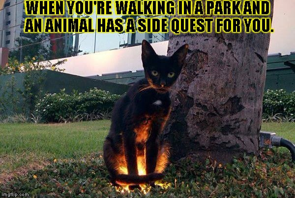 side quest cat | WHEN YOU'RE WALKING IN A PARK AND AN ANIMAL HAS A SIDE QUEST FOR YOU. | image tagged in side quest cat | made w/ Imgflip meme maker